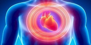 Niacin supports the heart